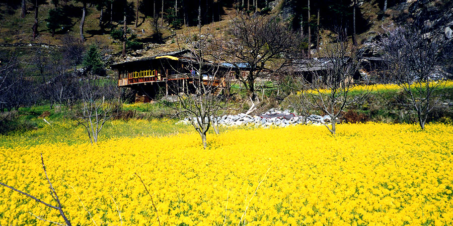 Naggar - Himachal Tour Package